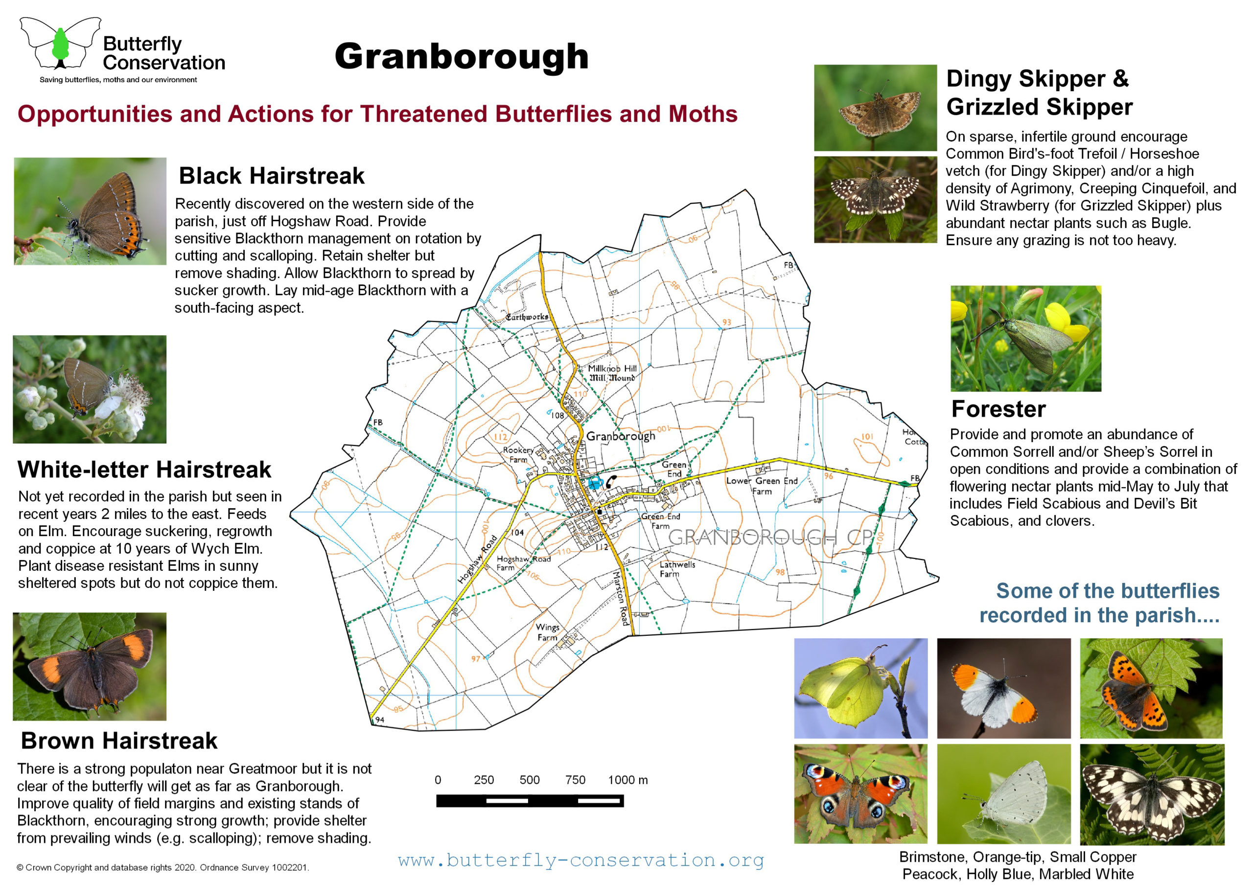 Summary Granborough Parish Opportunities And Actions For Priority Butterflies And Moths